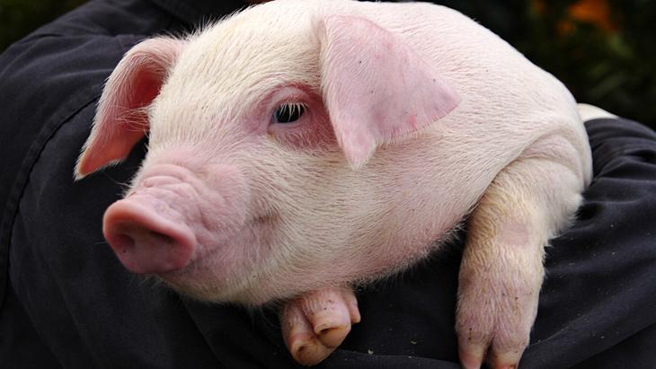 ZRATTO!しずおか   豚肉