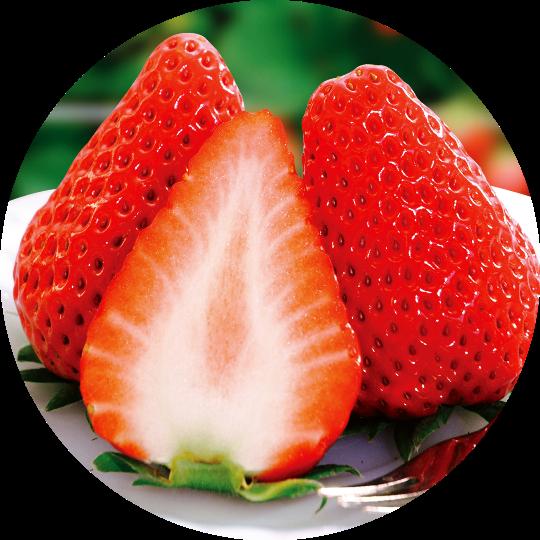 イチゴ(丸の切り抜き) - コピー