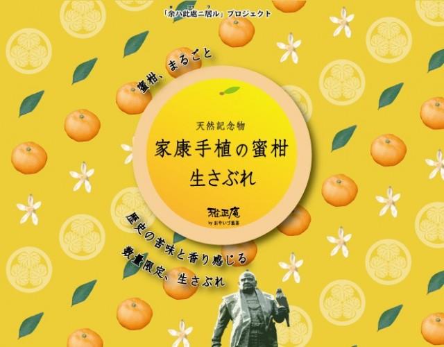 本日発売!「家康手植の蜜柑 生さぶれ」
