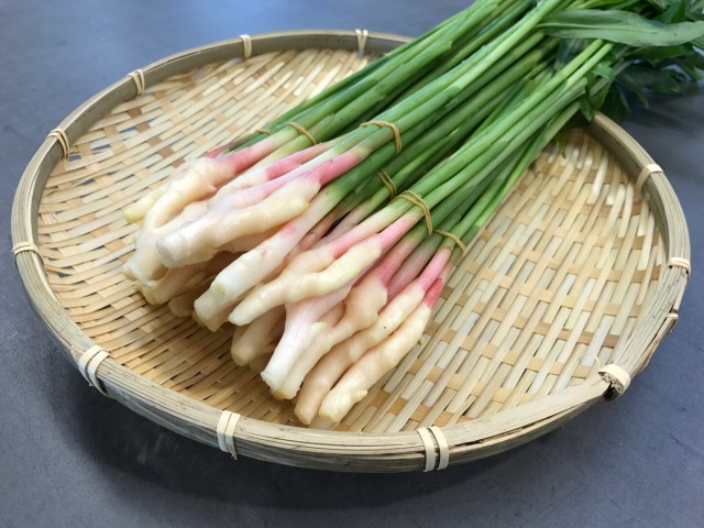 春の時期の出荷量は日本一!早出しの産地として有名な「葉しょうが」