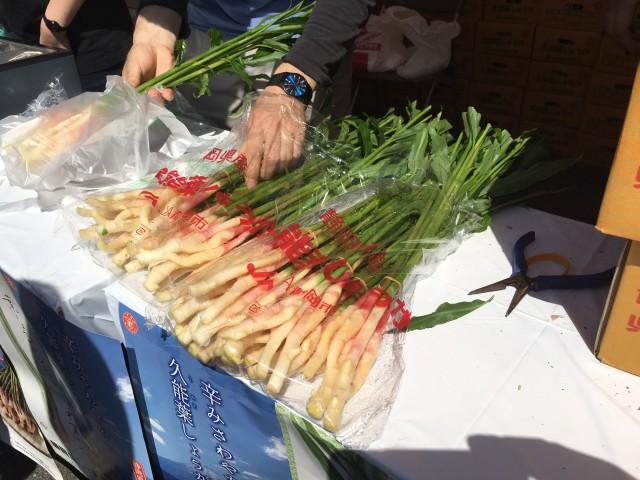 用宗漁港祭りで「葉しょうが」をPR!