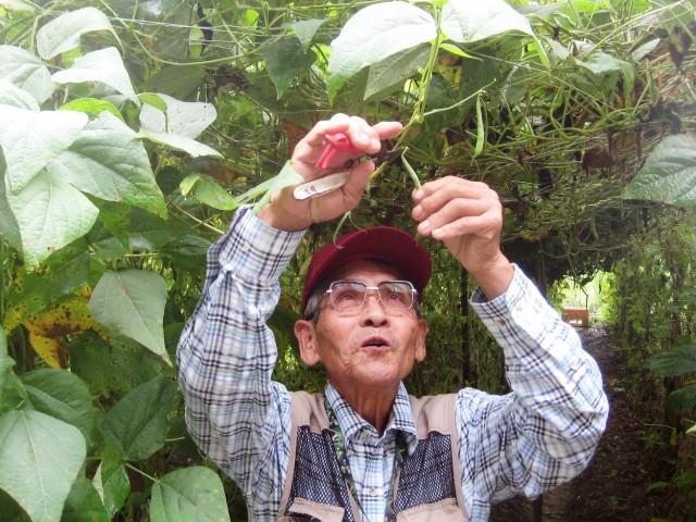 「野菜の日」に静岡市産のサヤインゲンはいかが?
