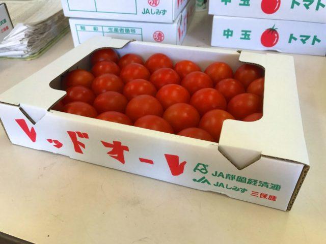 促成栽培発祥の地!清水区三保・折戸の「トマト」が出荷されています。