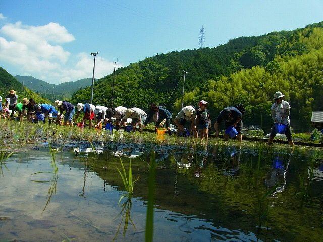 両河内の休耕地でお米作り体験しませんか?