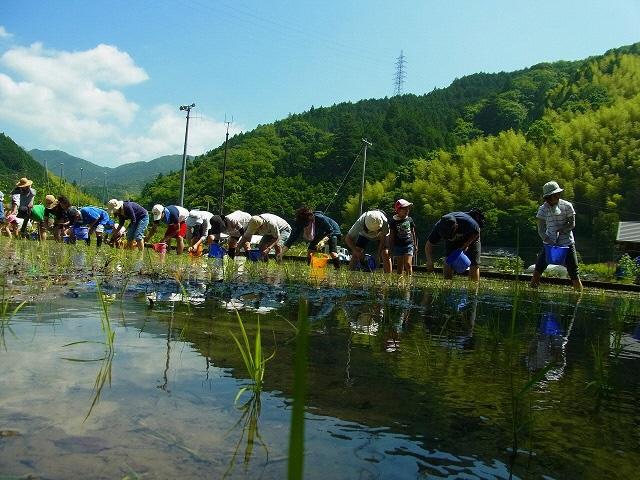 両河内の休耕地でお米作り体験しませんか?の画像