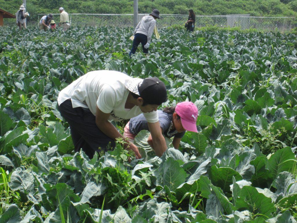 アグリチャレンジパーク蒲原 「ブロッコリーの収穫体験」の参加者を募集しています。の画像