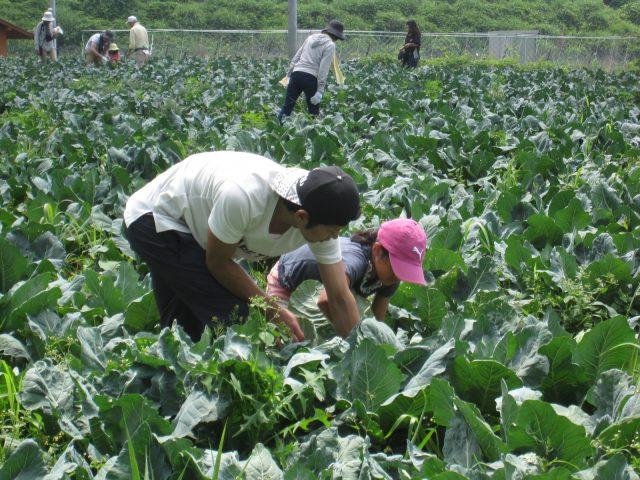 アグリチャレンジパーク蒲原 「ブロッコリーの収穫体験」の参加者を募集しています。