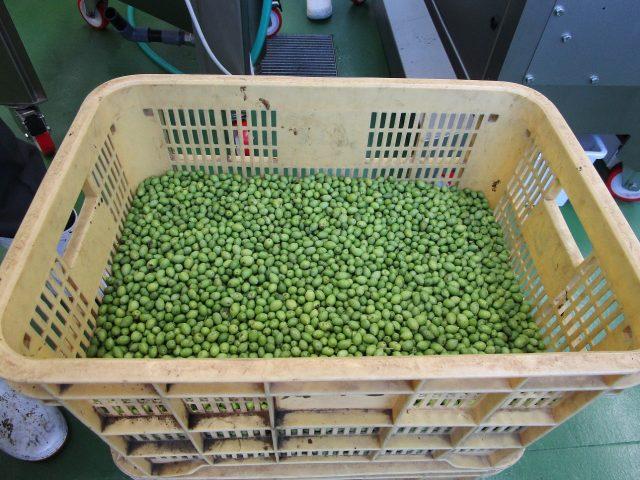 新鮮!! 「静岡市産オリーブオイル」