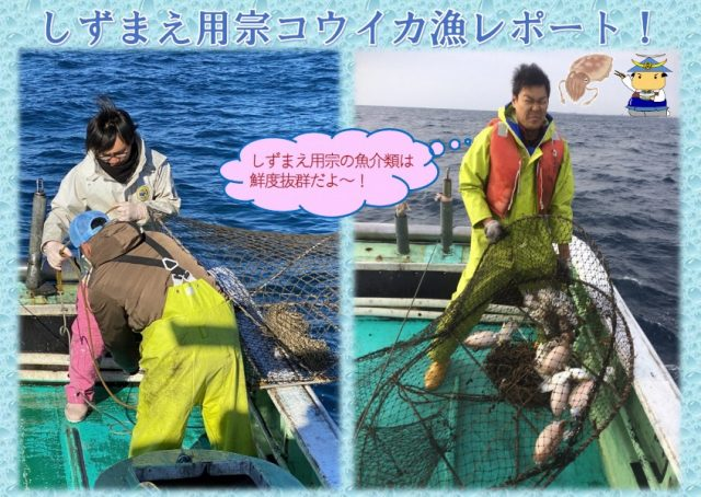 用宗コウイカ漁レポート!