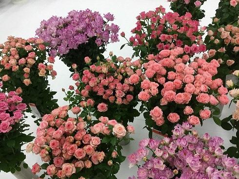 お花を飾り、春を感じてみませんか!の画像