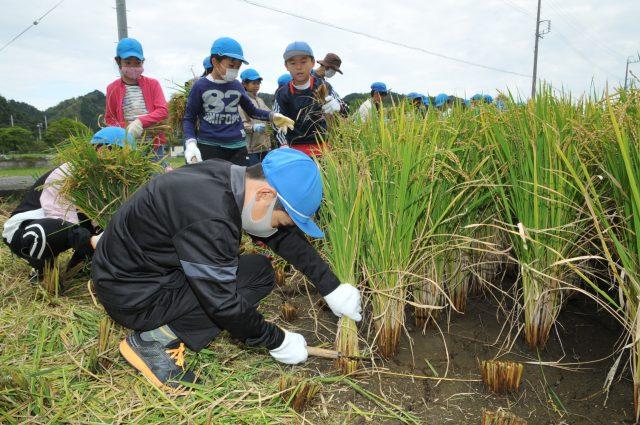 実りの秋、収穫の秋、市内小学生が稲刈体験!
