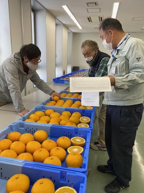 第29回中晩柑果実品評会が開催されました!の画像
