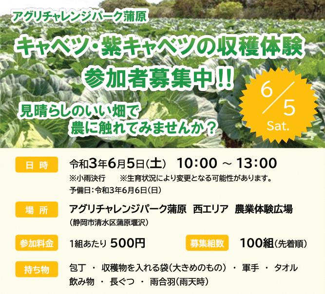 アグリチャレンジパーク蒲原「キャベツ・紫キャベツの収穫体験」参加者募集!の画像