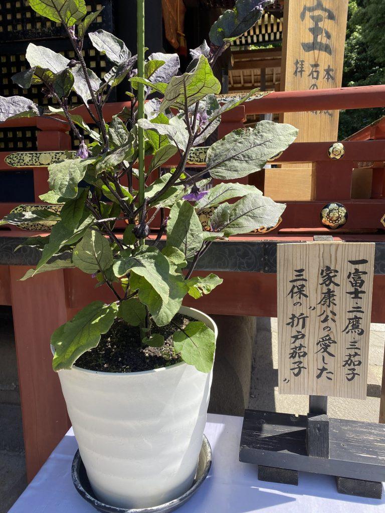 一富士、二鷹、三茄子♪「折戸なす」久能山東照宮へ奉納の画像