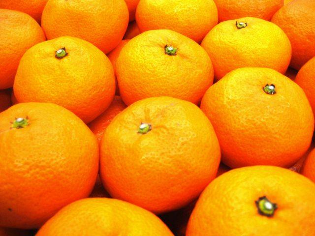 2021柑橘特撰便 ~しみずの美味しい柑橘をお届けします~
