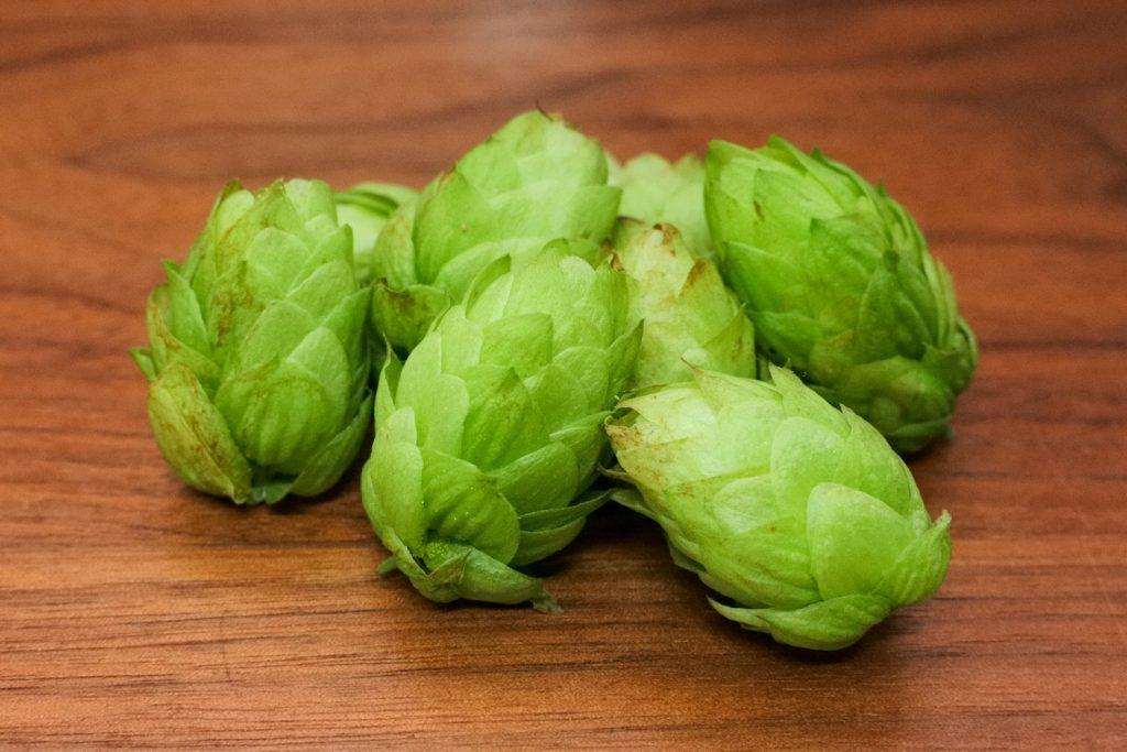 ビールには欠かせない「ホップ」を収穫!の画像