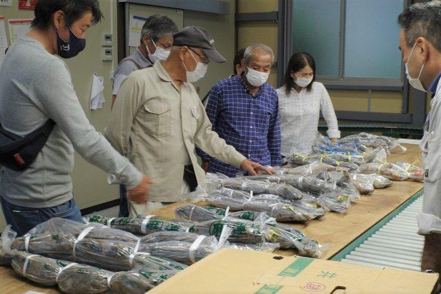 静岡の秋の味覚といえば「あさはた蓮根」・「ほんやま自然薯」!